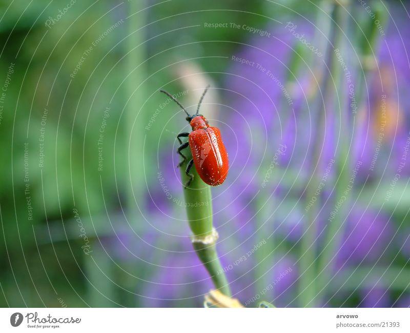 Käfer Frühling Garten