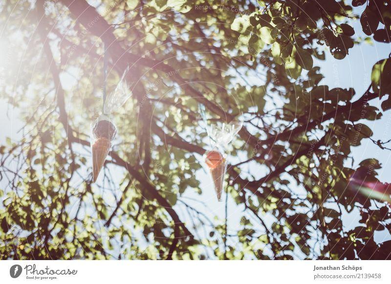 Zuckertütenbaum I Umwelt Natur Garten Park Gefühle Freude Glück Lebensfreude Vorfreude Begeisterung Beginn Erwartung Schule Einschulung Schultüte Süßwaren Ball