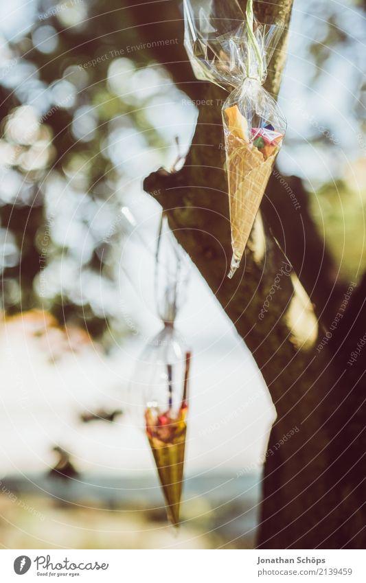 Zuckertütenbaum II Kind Natur Baum Freude Gefühle Glück Garten Schule Feste & Feiern Park Beginn Lebensfreude Geschenk Ostern Süßwaren Suche