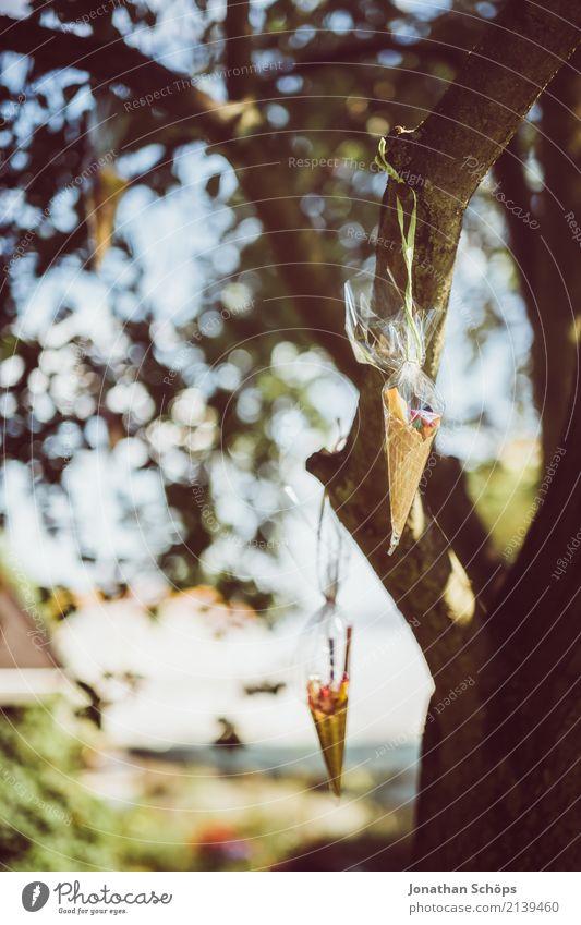 Zuckertütenbaum VI Natur Garten Park Gefühle Freude Glück Lebensfreude Vorfreude Begeisterung Beginn Erwartung Schule Einschulung Schultüte Süßwaren Ball