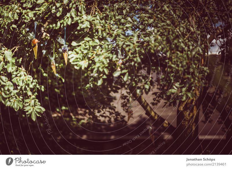 Zuckertütenbaum VII Natur Garten Park Gefühle Freude Glück Lebensfreude Vorfreude Begeisterung Beginn Erwartung Schule Einschulung Schultüte Süßwaren Spielzeug