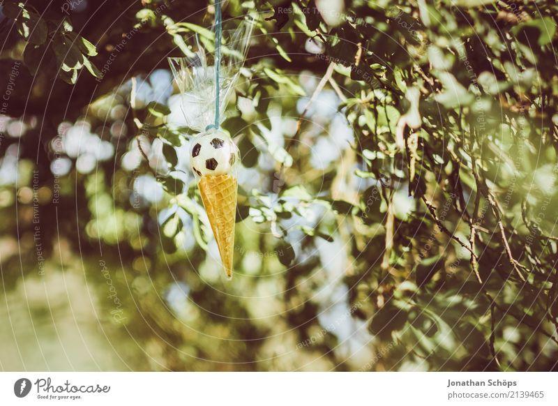 Zuckertütenbaum IV Natur Garten Park Gefühle Freude Glück Lebensfreude Vorfreude Begeisterung Beginn Erwartung Schule Einschulung Schultüte Süßwaren Ball