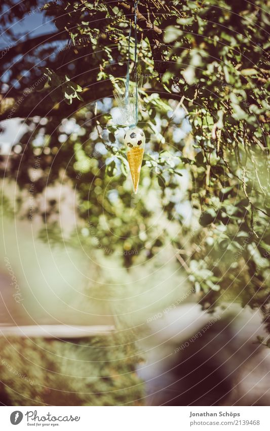 Zuckertütenbaum V Kind Natur Baum Freude Gefühle Glück Garten Schule Feste & Feiern Park Beginn Lebensfreude Geschenk Ostern Süßwaren Suche