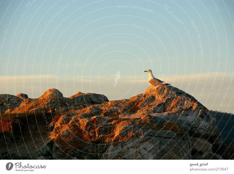romantikliebende Möwe Natur Himmel blau Sommer Einsamkeit Tier Gefühle Freiheit Stein Landschaft Stimmung Vogel Umwelt Felsen Erde frisch