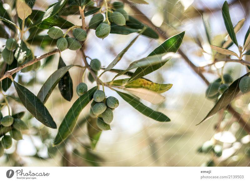 Oliven Natur Pflanze Sommer grün Baum Umwelt natürlich Olivenbaum
