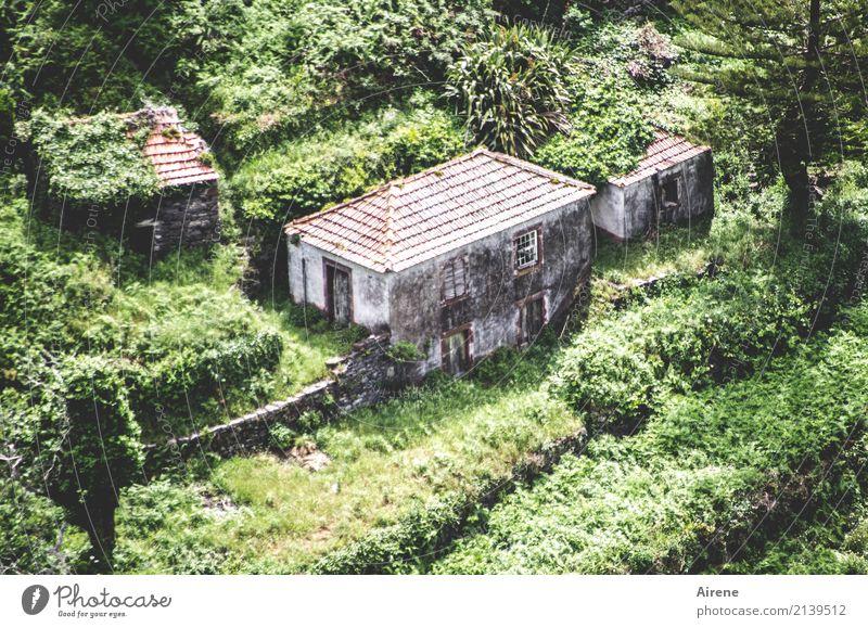 da hab ich was Eigenes Natur alt grün Einsamkeit Haus Berge u. Gebirge klein Häusliches Leben Zufriedenheit authentisch Armut einfach Landwirtschaft Hütte