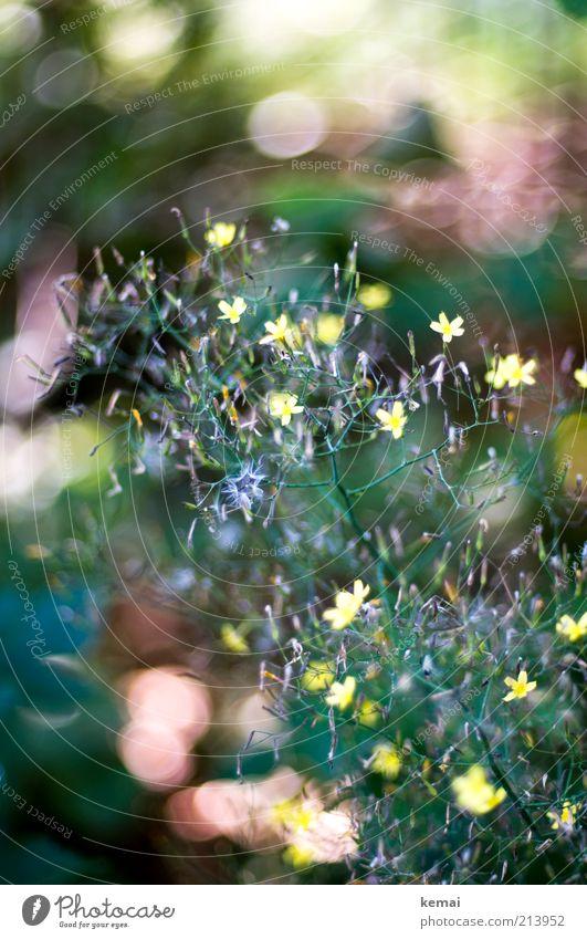 Waldblumen Umwelt Natur Pflanze Sonnenlicht Sommer Schönes Wetter Wärme Blume Sträucher Blatt Blüte Wildpflanze Blühend Wachstum gelb grün Farbfoto