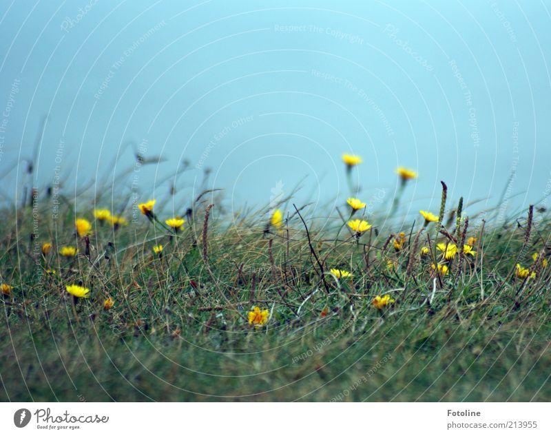 karg Natur Himmel Blume grün blau Pflanze Sommer gelb Wiese Blüte Gras Landschaft hell Küste Umwelt Erde