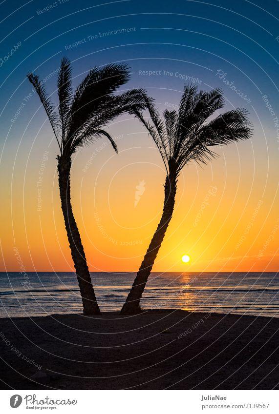 Sonnenaufgang unter Palmen Himmel Natur Ferien & Urlaub & Reisen Sommer Wasser Landschaft Meer Erholung Einsamkeit ruhig Strand natürlich Küste Tourismus Idylle