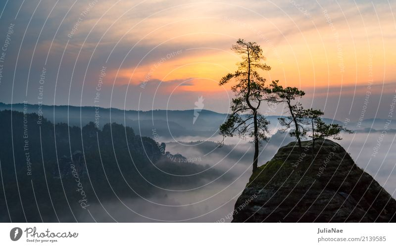 nebeliger Sonnenaufgang im Elbsandsteingebirge Sächsische Schweiz Herbst Nebel Felsen Stein Baum Berge u. Gebirge Rathen Bastei Tal Morgen Schatten Silhouette