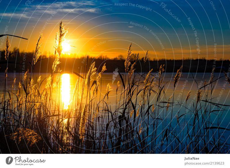 Sonnenuntergang hinter Gräsern Erholung ruhig Ferien & Urlaub & Reisen Wasser Gras See blau orange Abenddämmerung Farbfoto Außenaufnahme Detailaufnahme