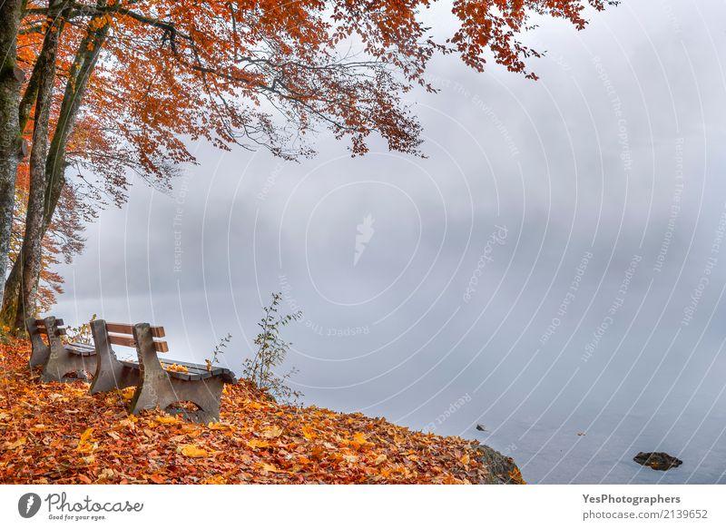Misty Lake Ufer und Herbst Wald Natur Ferien & Urlaub & Reisen Farbe Baum Landschaft Erholung Blatt Traurigkeit Wiese natürlich Glück Tourismus Deutschland See