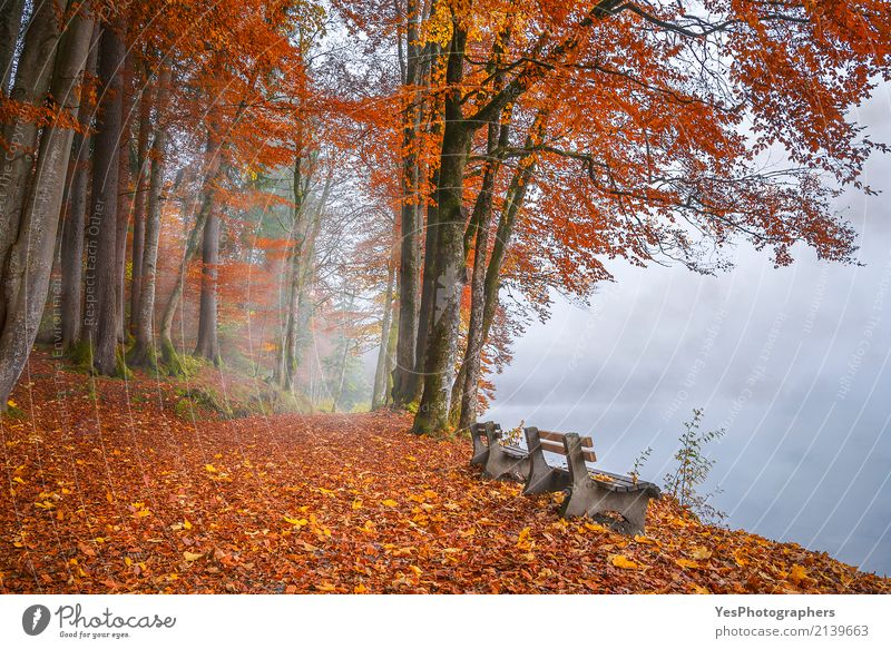 Misty Lake Ufer und Herbst Wald Natur Ferien & Urlaub & Reisen Farbe Baum Landschaft Erholung Blatt ruhig Freude Traurigkeit natürlich Freiheit Tourismus