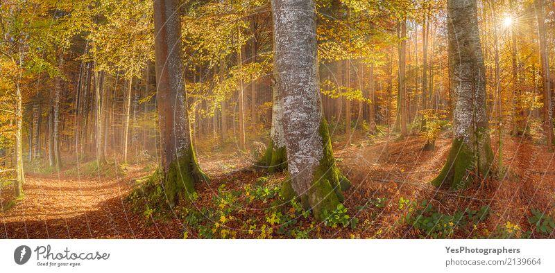 Sonnenschein durch Herbstwald Natur Ferien & Urlaub & Reisen Farbe Baum Landschaft Erholung Blatt Freude Wald Wärme gelb natürlich Glück Deutschland