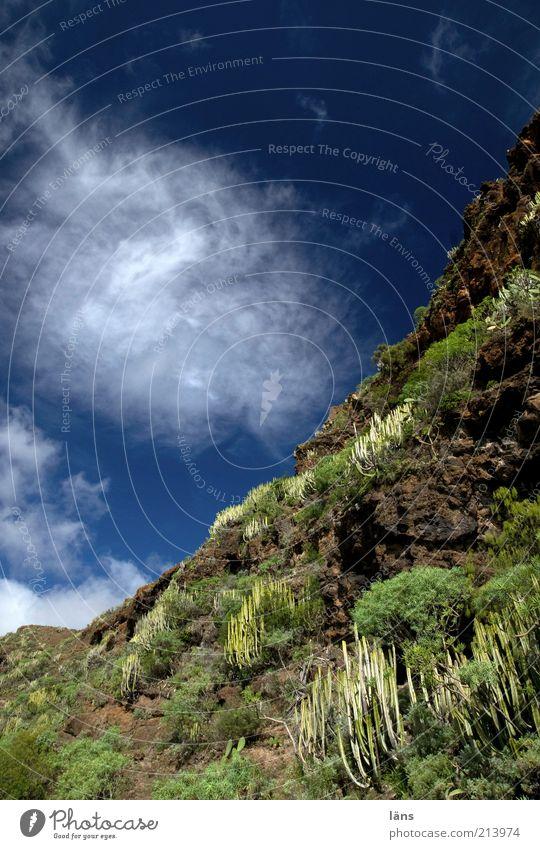 abwärts Himmel Pflanze Wolken Berge u. Gebirge Umwelt Felsen Wachstum Hügel Kaktus Berghang Grünpflanze Wildpflanze