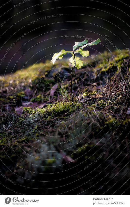 Licht im Dunkel Natur schön Pflanze Blume Umwelt dunkel kalt Wärme Herbst Gras hell Beleuchtung Stimmung Erde natürlich Hügel