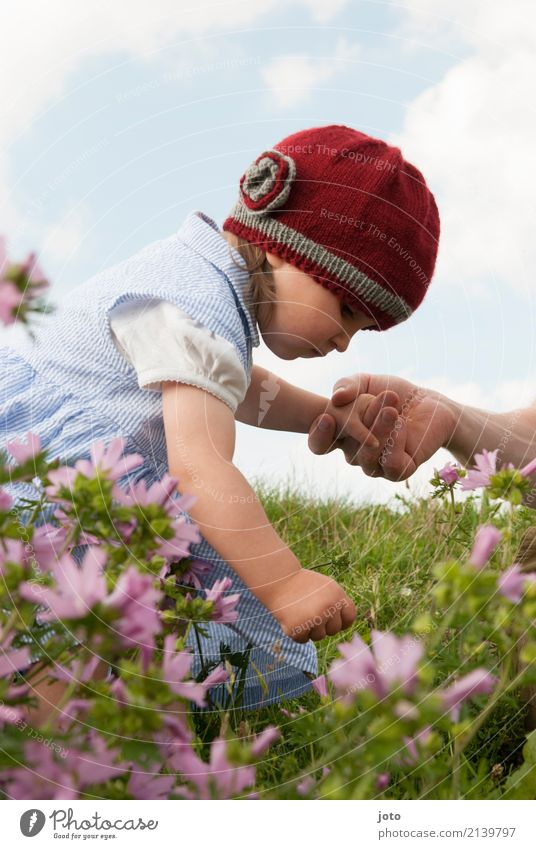 Ein Blümchen Ausflug Sommer Sommerurlaub Kindererziehung Bildung lernen Kleinkind Mädchen Familie & Verwandtschaft Kindheit Hand 1-3 Jahre Natur Blume Blüte