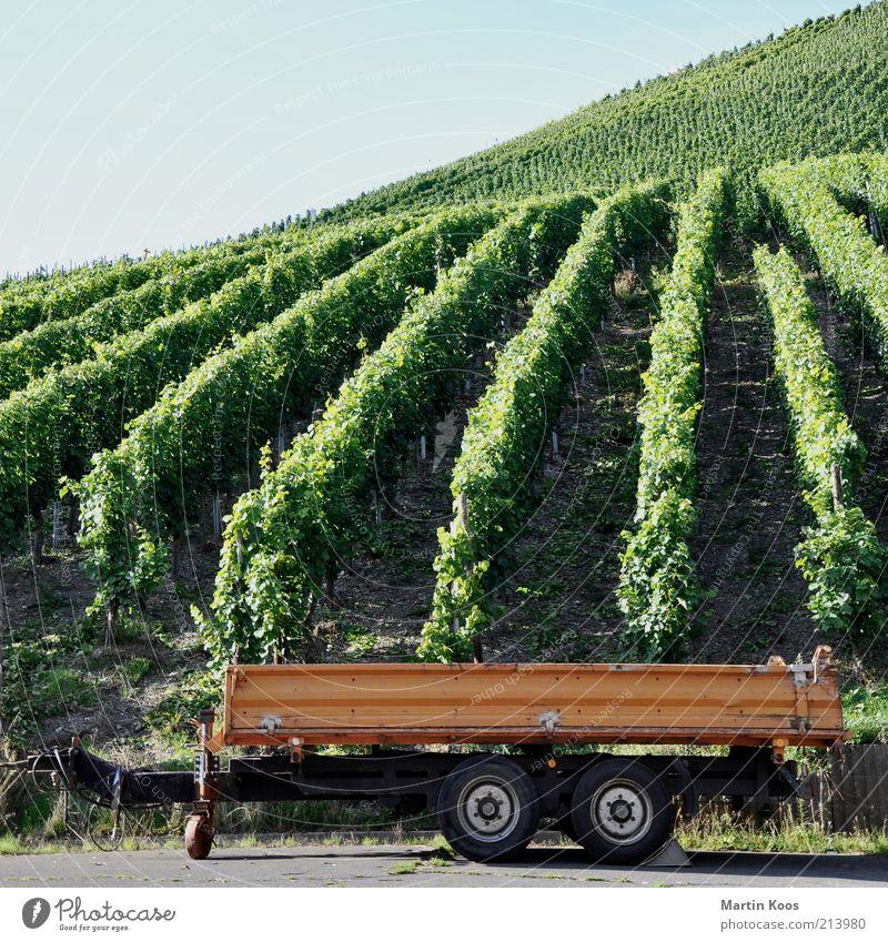 WeinWagen Stil Leben Feierabend natürlich Anhänger Weinlese Weinberg Berghang Hügel Berge u. Gebirge Rad Riesling Reihe Linie Strukturen & Formen Bremsklotz