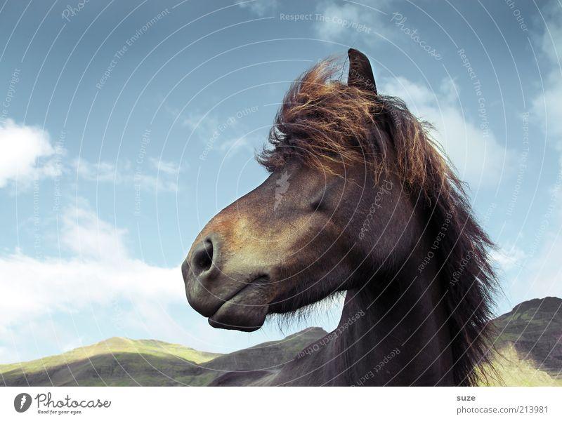 Bobby Brown Himmel Natur blau Tier Wolken Landschaft Berge u. Gebirge Haare & Frisuren natürlich Wind wild Wildtier warten stehen ästhetisch Pferd