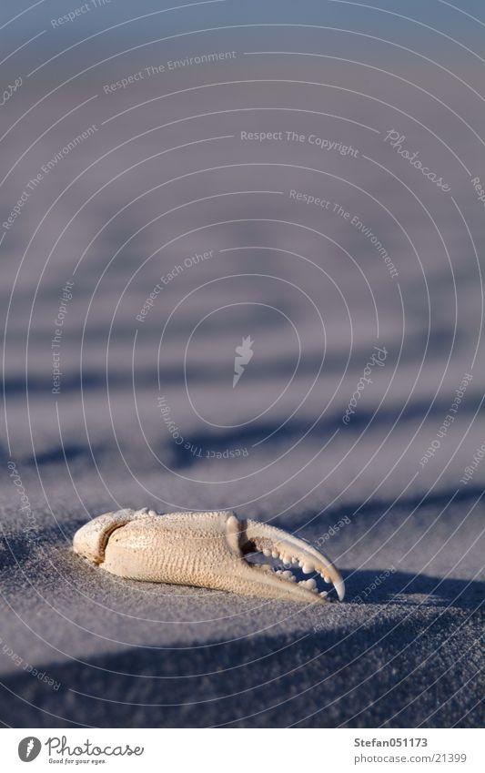 Viertel Krebs im Sand Strand Tier Sand Verkehr Krebstier