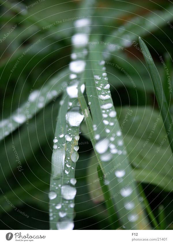 Wiese nach dem Regen Wasser grün Gras Wassertropfen Seil feucht