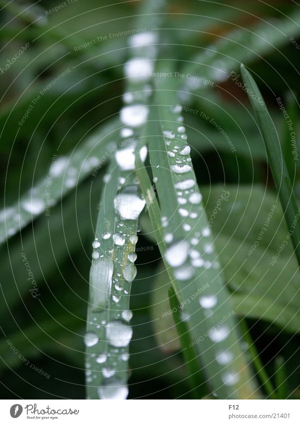 Wiese nach dem Regen Wasser grün Wiese Gras Regen Wassertropfen Seil feucht