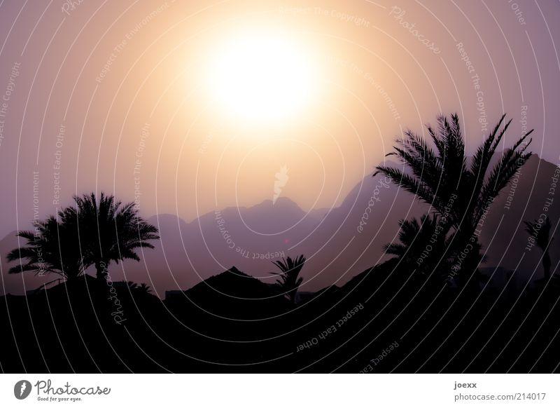 Tausendundeine Nacht Natur Landschaft Himmel Sonne Sonnenlicht Schönes Wetter Wärme Baum Berge u. Gebirge Dach heiß braun Palme Ägypten Farbfoto Gedeckte Farben