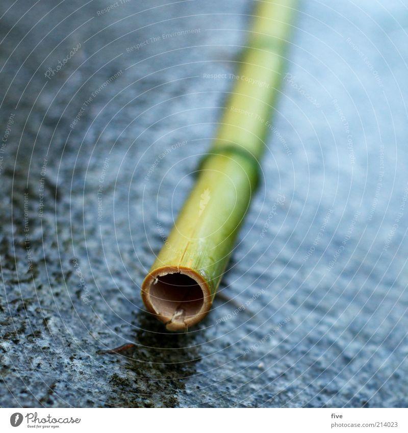 o Natur grün Pflanze schwarz Regen Umwelt nass rund Boden Loch exotisch Bambus Bambusrohr schlechtes Wetter Bodenplatten