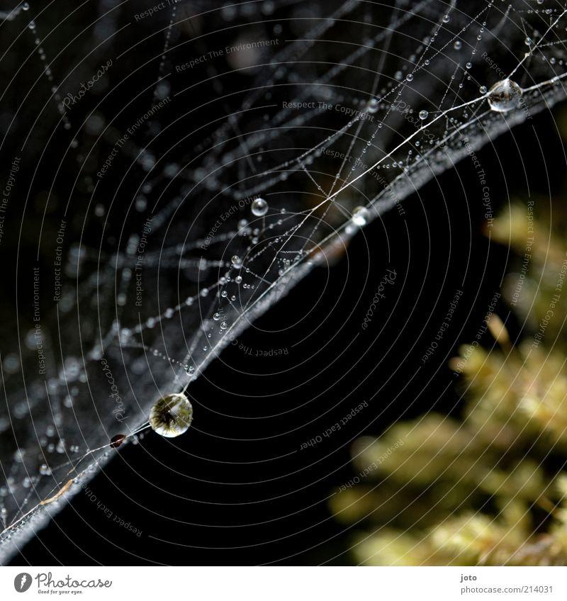 Herbstbeginn Natur Regen Linie Schnur Netz Netzwerk Tropfen ästhetisch elegant ruhig Genauigkeit Umwelt Zusammenhalt feucht nass Tau Wassertropfen gesponnen