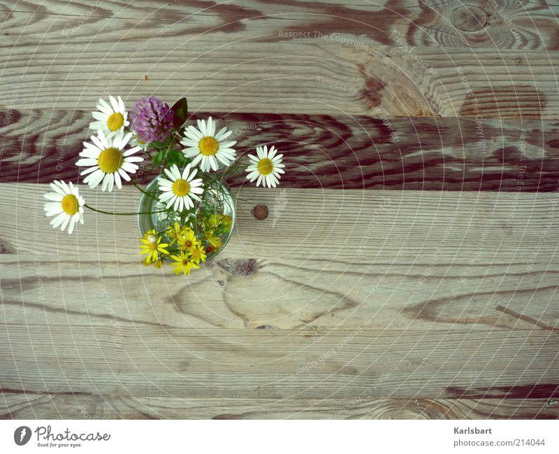 o´pflückt is. Blume Pflanze Sommer Freude Stil Blüte Frühling Holz Design Tisch Lifestyle Freizeit & Hobby Dekoration & Verzierung Häusliches Leben Blumenstrauß