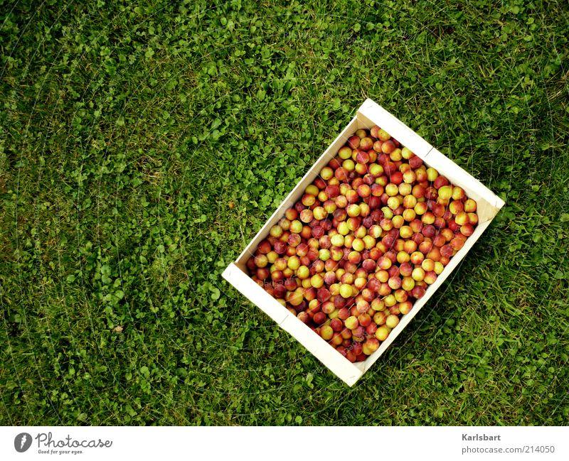 erntedank. Lebensmittel Frucht Mirabelle Ernährung Bioprodukte Vegetarische Ernährung Lifestyle Freude Glück Gesundheit Sommer Garten Erntedankfest Gartenarbeit