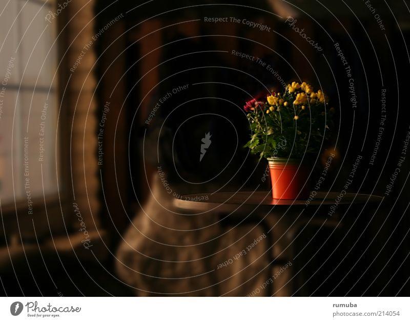 lumière Dekoration & Verzierung Pflanze Blatt Blüte Topfpflanze Fassade Terrasse Blühend leuchten rot Stimmung Warmherzigkeit Leben Lebensfreude orange