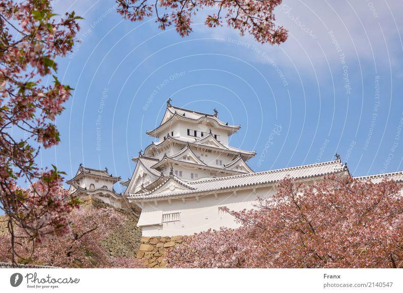 Burg Himeji - Japan Palast Burg oder Schloss Bauwerk Gebäude Architektur Garten Sehenswürdigkeit Wahrzeichen elegant Kirschblüten Castle Fühling