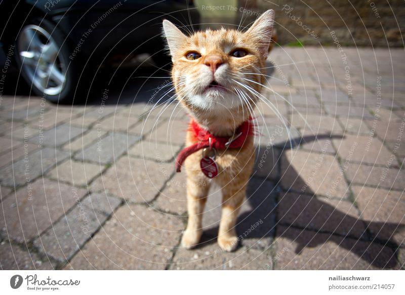 Katze weiß rot Tier PKW lustig ästhetisch nah Tiergesicht Fell Neugier niedlich Haustier Interesse Schatten Licht