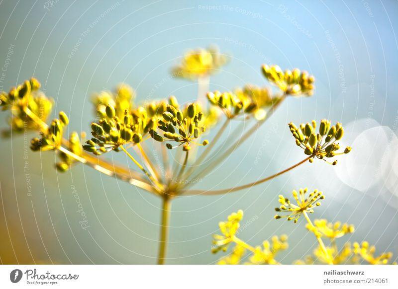 Herbstlich Natur blau Pflanze gelb Blüte Umwelt ästhetisch Makroaufnahme Pflanzenteile Wildpflanze