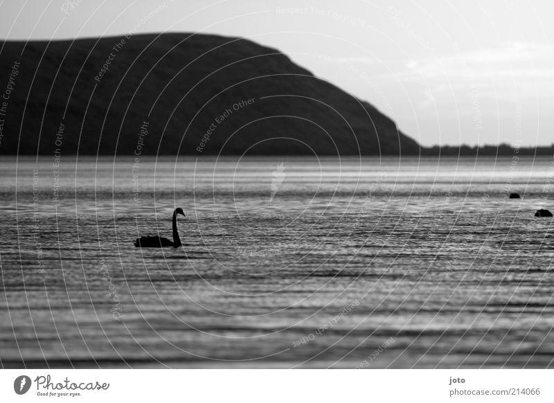 auf der Suche Natur Wasser schön ruhig Einsamkeit Tier Leben dunkel Berge u. Gebirge Freiheit See Landschaft Vogel elegant ästhetisch Frieden