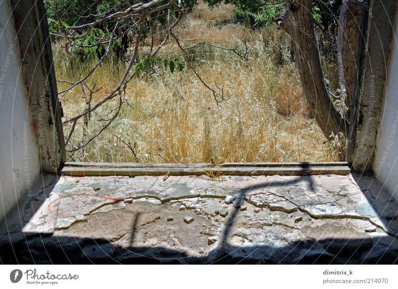 Naturszene Landschaft Pflanze Baum Menschenleer Haus Ruine Gebäude Fenster alt Einsamkeit Verfall Zeit Verlassen Verwesung ländlich gebrochen Kofferraum