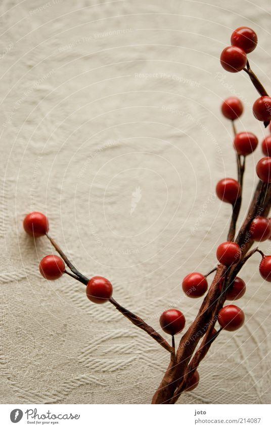 rouge Frucht Beeren Dekoration & Verzierung Pflanze Sträucher Blühend Duft genießen Gesundheit frisch rot Stimmung Vorfreude Hagebutten Ast Herbst ruhig