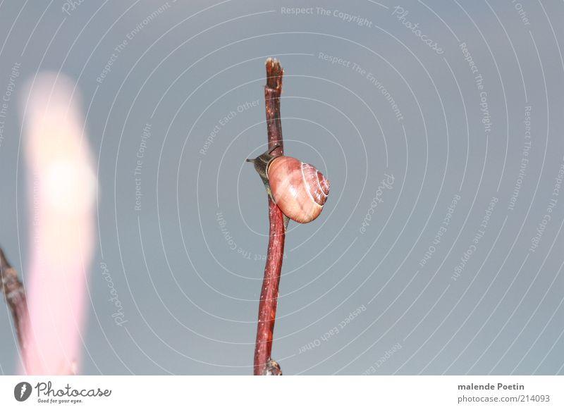 Gipfelstürmer ruhig Tier Herbst Gefühle Stimmung Luft Sträucher Lebensfreude Neugier Hoffnung Sicherheit Gelassenheit Mut selbstbewußt anstrengen Schnecke