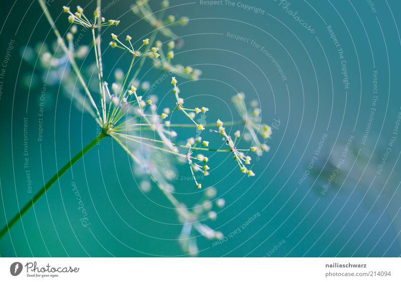 Fragil Umwelt Natur Pflanze Blume Blüte Grünpflanze Wildpflanze ästhetisch blau gelb grün weiß zerbrechlich Farbfoto Außenaufnahme Nahaufnahme Detailaufnahme