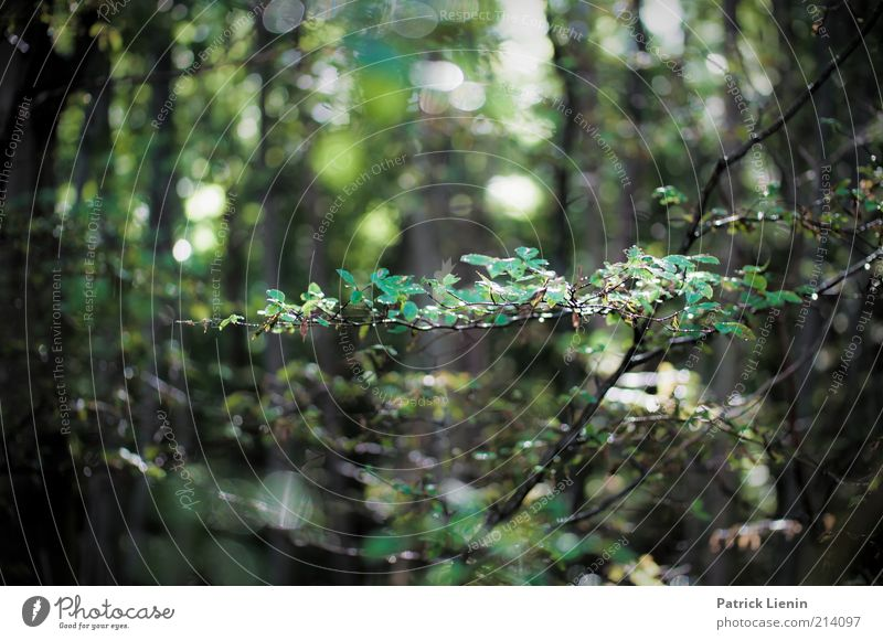 WaldRegen Natur Wasser grün schön Baum Pflanze Sommer Blatt Umwelt Landschaft Wetter nass Klima Wassertropfen