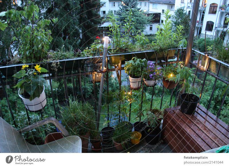 balkon leben 2 Häusliches Leben Balkon Balkonpflanze Balkondekoration Frühling Sommer schlechtes Wetter Pflanze Blume Topfpflanze Hinterhof Blumentopf Blühend