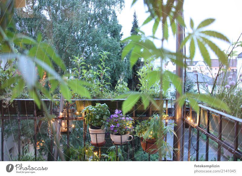 balkon leben 1 Sommer Wohnung Balkonpflanze Balkondekoration Pflanze Frühling Hanf Blatt Grünpflanze Topfpflanze Hinterhof Blumentopf balkongeländer Blühend