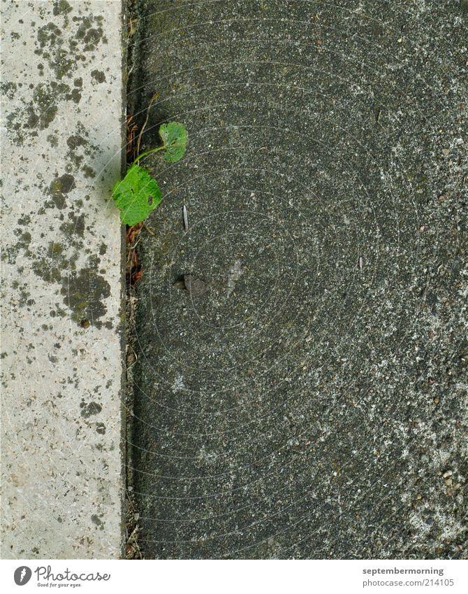 Durchbruch Grünpflanze Mauer Wand Beton grau Kraft Hoffnung Gedeckte Farben Außenaufnahme Menschenleer Tag Fuge Textfreiraum unten Textfreiraum Mitte