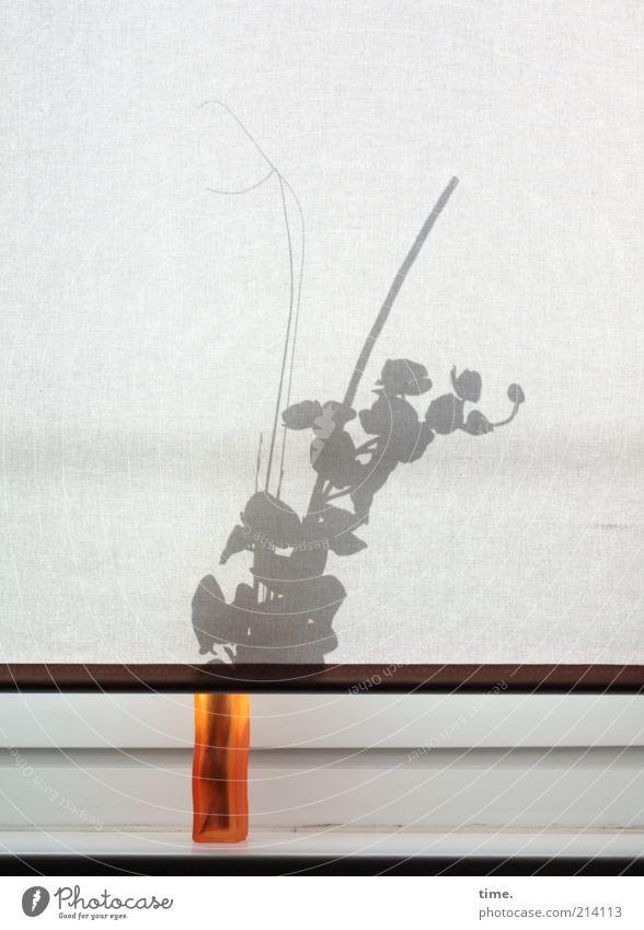 Flaschengeist Vase Blume Silhouette Innenaufnahme Gegenlicht orange Fenster Vorhang Gardine Fensterbrett Fenstersims Blüte verstecken rückwärts einfach