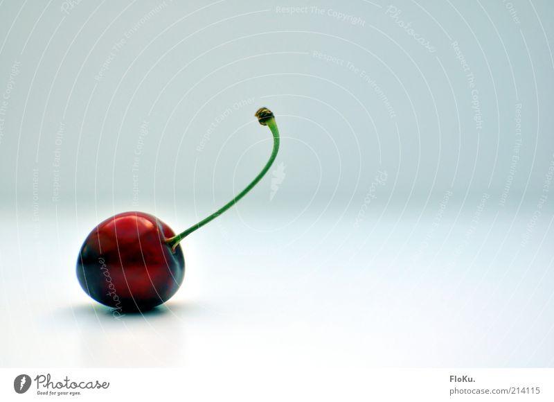 just Kirsche schön weiß rot Ernährung glänzend Lebensmittel Frucht frisch ästhetisch süß rund Stengel lecker Diät Bioprodukte