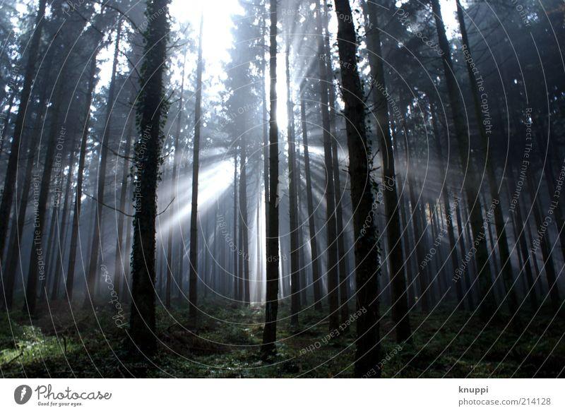 Ein bisschen Nebel am Morgen... Natur weiß Sonne Pflanze schwarz Wald dunkel Herbst Gras Holz Landschaft Umwelt Wachstum Sträucher