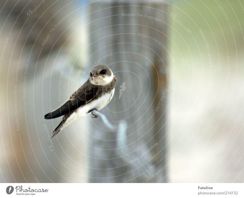 Was guckst du? Umwelt Natur Tier Urelemente Luft Sommer Küste Strand Wildtier Vogel Flügel sitzen natürlich wild Uferschwalben Schwalben Feder Farbfoto