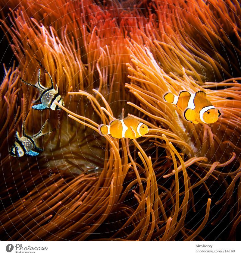 fishmob Natur Tier Umwelt Glück Bewegung Stil Freundschaft Zusammensein Fisch Dekoration & Verzierung Lebensfreude Partnerschaft Haustier Im Wasser treiben Unterwasseraufnahme Fischauge