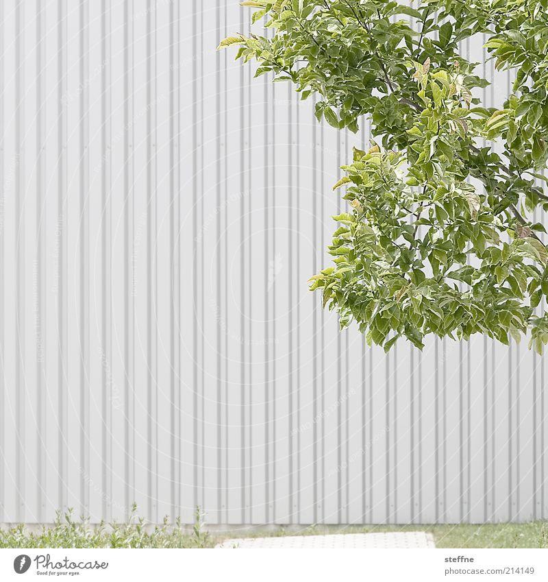 [H 10.1] Günter Gras: Das Blech ohne Trommelwirbel Baum Blatt Wand Mauer trist Schönes Wetter Zweige u. Äste Wellblech Wellblechwand